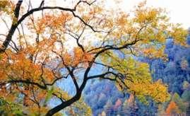 秋天,去邂逅最美的红叶