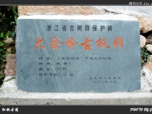 [2008.11.30] 文成红枫古道(大会岭)行随拍