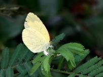 蝗虫与蝴蝶