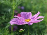 在一个农场里看到的,有谁知道这花的名字