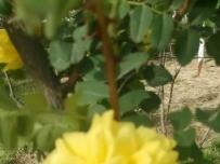 一朵不知名的漂亮的小黄花